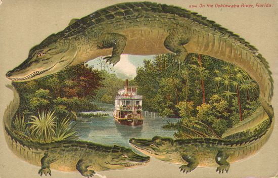 Gator Post Card