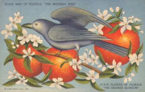 Fla State Bird- Mocking bird with Orange Blossoms